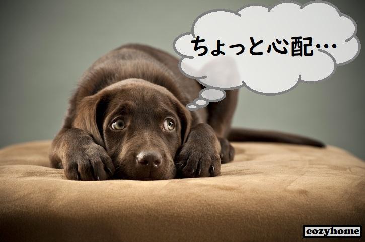 床に伏せる黒い犬